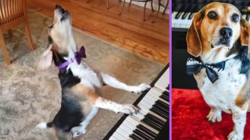 Buddy Mercury is a singing rescue dog