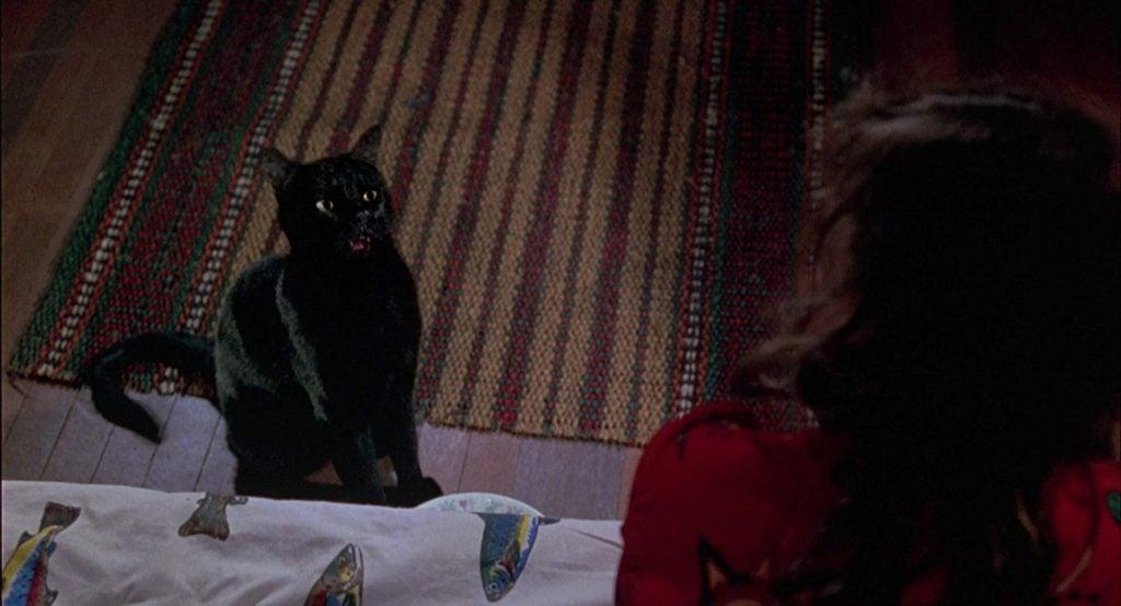 Thackery Binx in the film, 'Hocus Pocus'.