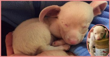 Piglet the pink puppy is inspiring children everywhere!