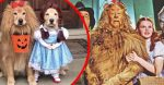 These Golden Retrievers Dressed As 'Wizard Of Oz' Characters Are Winning Halloween This Year