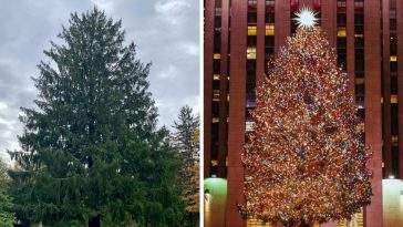 This years Rockefeller Center Christmas tree has officially been chosen