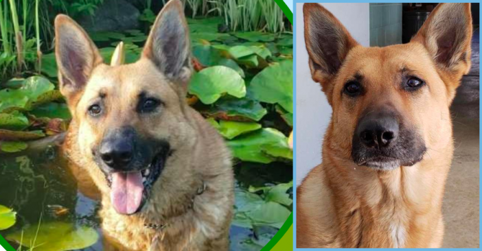 CT Police Dog Still In The Pound Two Years Later Because No One Will Take Her In
