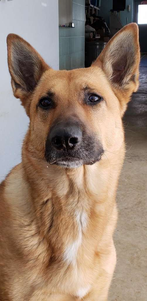 CT police dog stuck at pound two years later