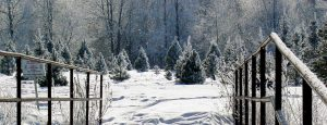 Ohio-grown Christmas trees are heading to Kuwait