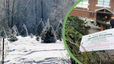Operation Evergreen sends Christmas trees to troops