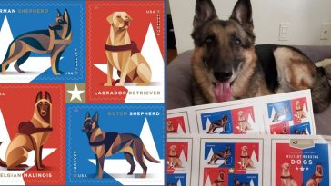 The USPS introduced military working dog stamps