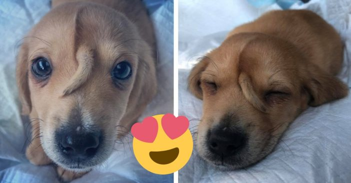 This puppy has a second tail on his face