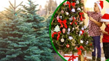 Why Christmas Trees Might Be More Expensive This Year In Some Parts Of The U.S.
