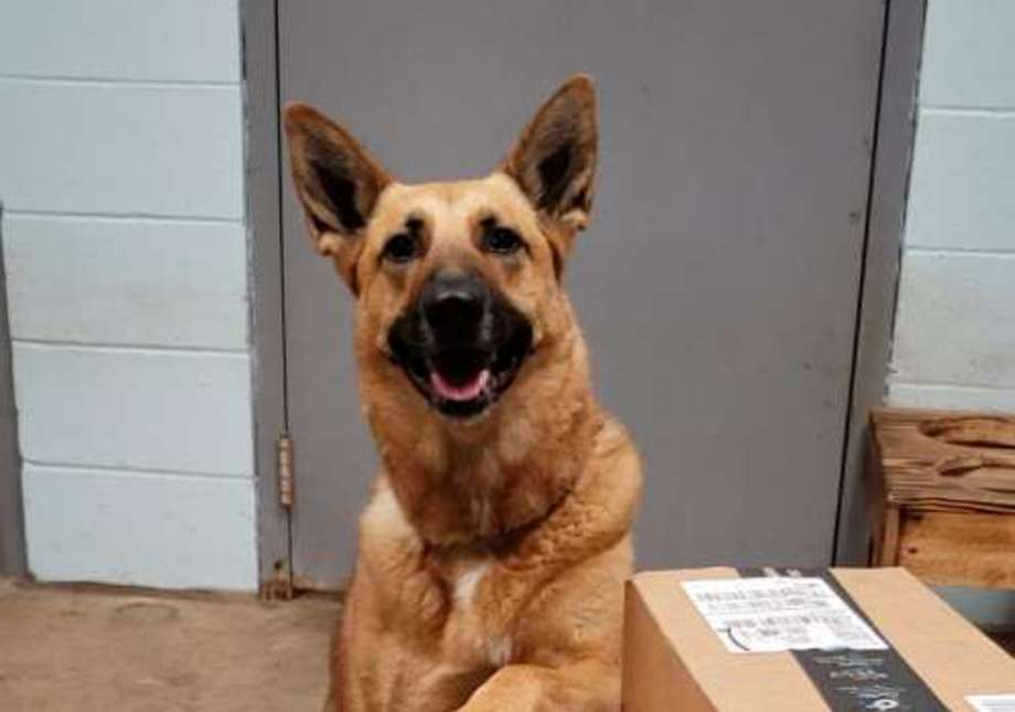 trained CT dog still in the pound