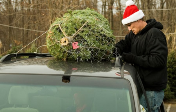 christmas trees may be more expensive this year