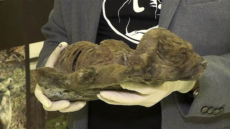 scientists found a preserved puppy