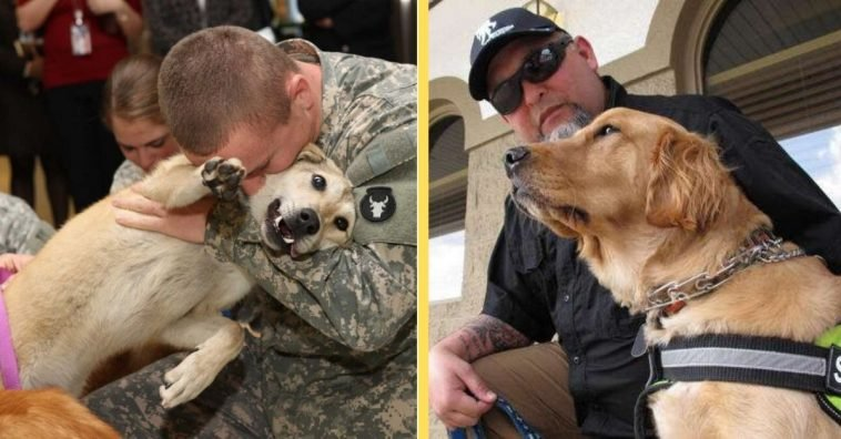 A New Potential Bill May Cover The Cost Of Service Dogs For Veterans With PTSD