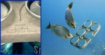 Beer Company Creates Edible Six-Pack Rings That Feed Marine Life