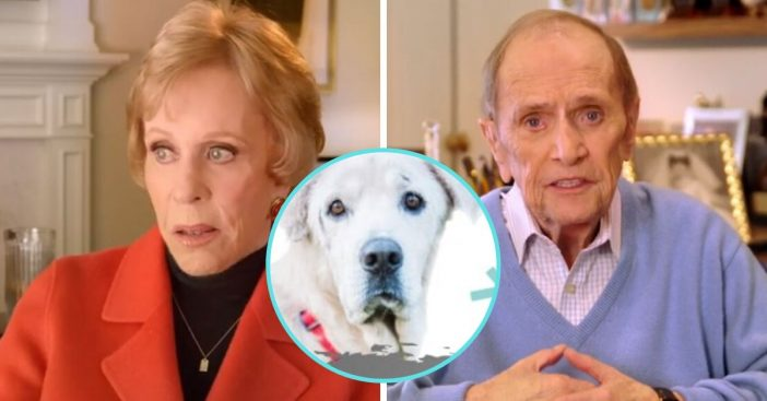 Carol Burnett and others advocate for senior pets in new PSA