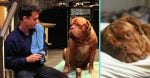 Disney Plus is working on a Turner and Hooch series