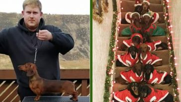 Dog Owner Teaches His 17 Dachshunds To Pose For Festive Holiday Photo