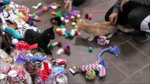 Fluffy critters staying with the animal rescue still got to enjoy some Christmas festivities