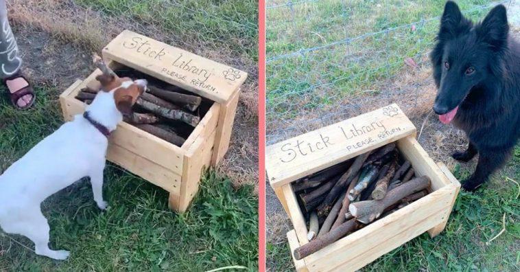 Man Builds Creative Stick Library For Dogs At The Local Park