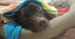 These dogs must know the blankets are knitted with love