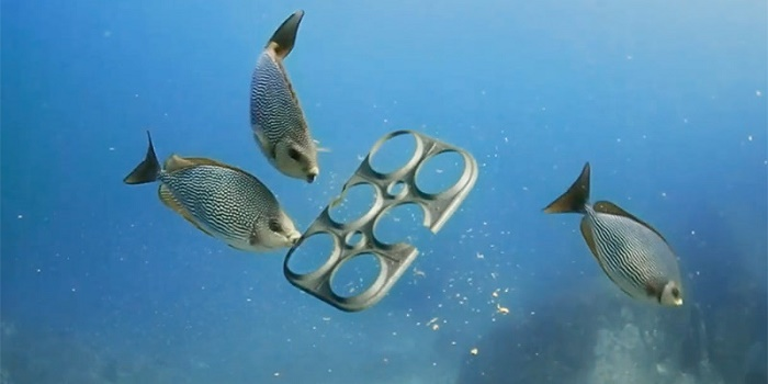 beer company makes edible six-pack rings for marine life