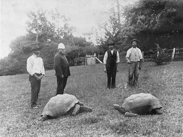 187 year old tortoise