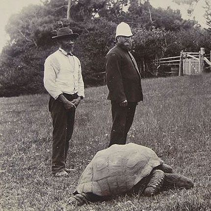 187 year old tortoise is world's oldest living animal on land