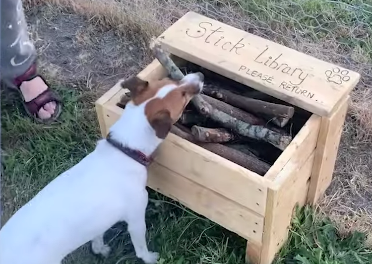 man builds stick library for dogs at the park