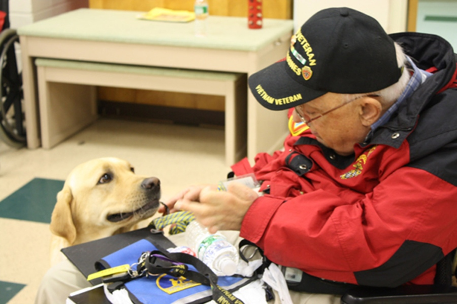new bill may cover cost of service dogs for veterans with PTSD