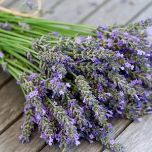 Lavender is definitely a healthy houseplant you want a lot of