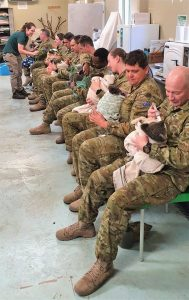 Members of the Australian Army use their free time to feed injured koalas, an important step in keeping this already-precarious species safe and secure