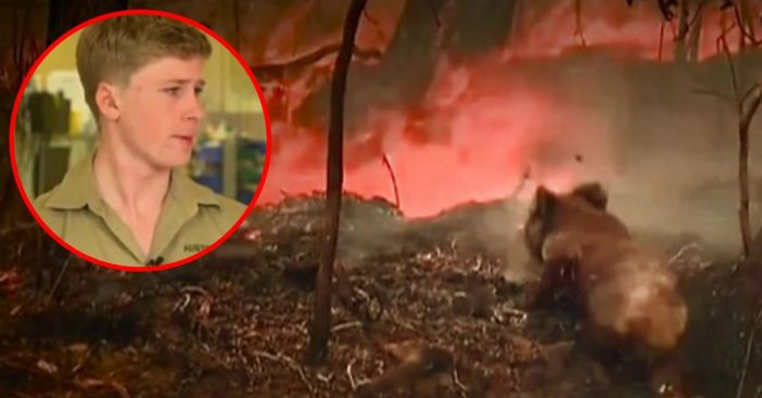 Robert Irwin Tears Up While Talking About The Injured Animals From The Australia Bushfires