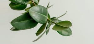 Some houseplants offer a lot of health benefits and look beautiful all the while