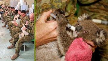 When they have free time, these army members spend it taking care of wounded koalas