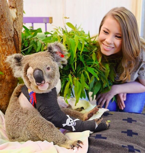 irwins helped over 90,000 animals in the australia fires