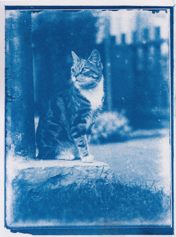 man develops 120-year-old cat photos found in time capsule