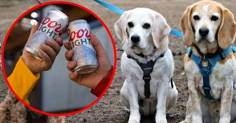 Coors Light To Cover $100 Worth Of Dog Adoption Fees Across The Country