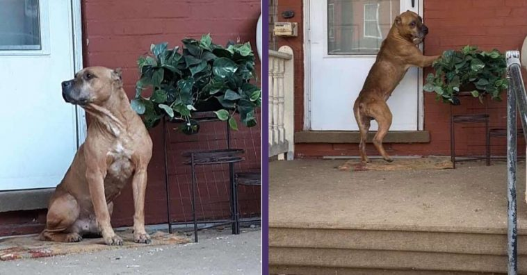 Dog Waits On The Front Porch Weeks After His Family Moved Away
