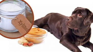 Pet owners, especially with dogs, are being advised to keep a close eye on their peanut butter