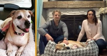Sandi's journey ended up helping her, her family, and other dogs