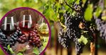 Wine enthusiasts and grape growers are experiencing pros and cons