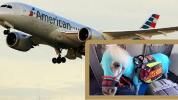 Woman Brings Mini Service Horse On Flight While DOT Considers Banning Them