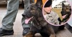 After they've retired, these military dogs need a place to call home and people to call family