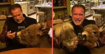 Arnold Schwarzenegger Is Staying Home During Coronavirus Outbreak With mini horse and donkey