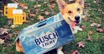Busch is offering free beer to people who adopt or foster a dog