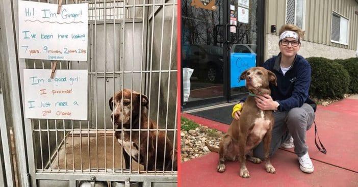 Shelter dog named Ginger gets adopted after 7 years