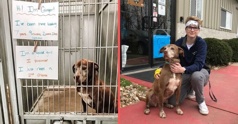 Shelter dog named Ginger gets adopted after 7 years