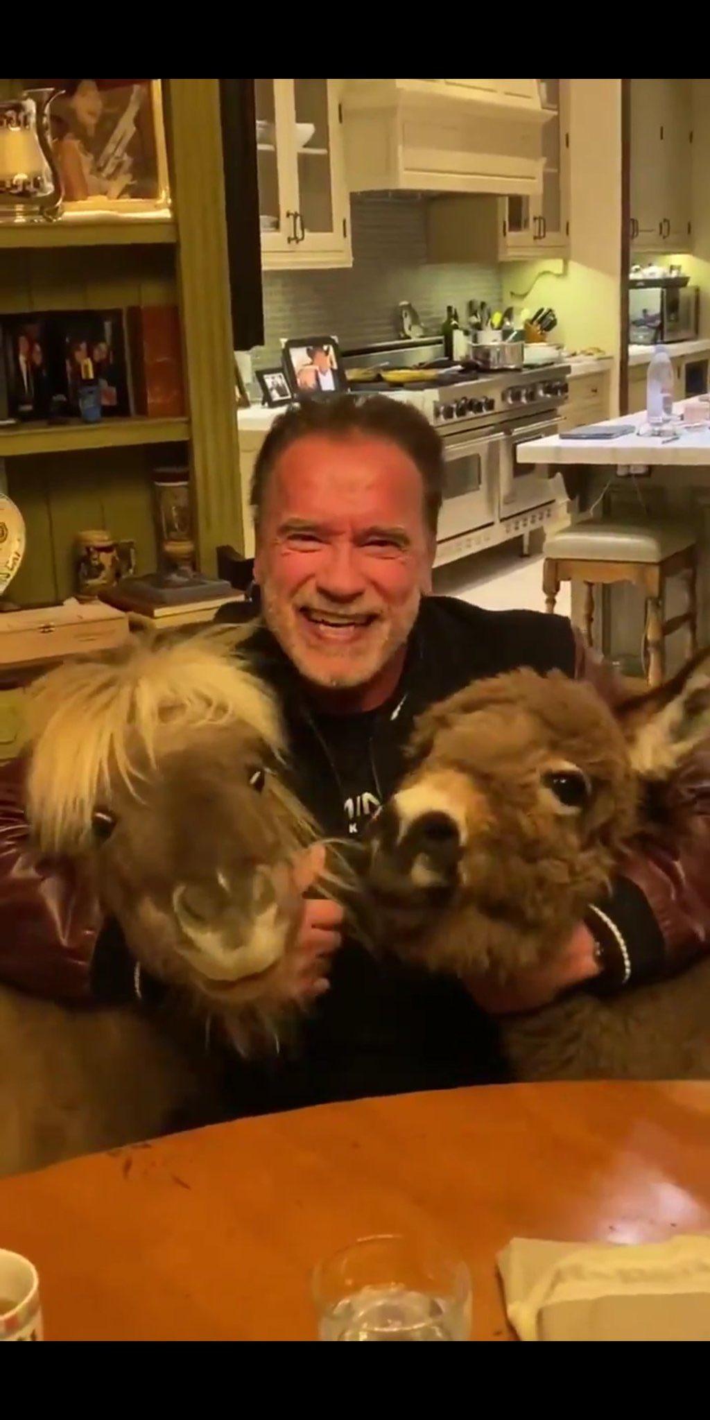 Arnold Schwarzenegger mini horse mini donkey