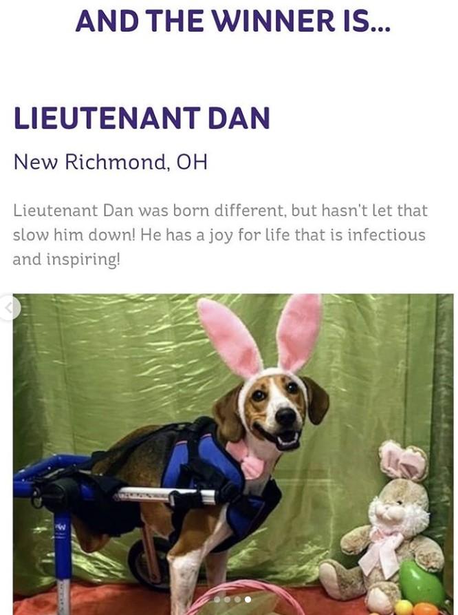 lieutenant dan cadbury bunny winner
