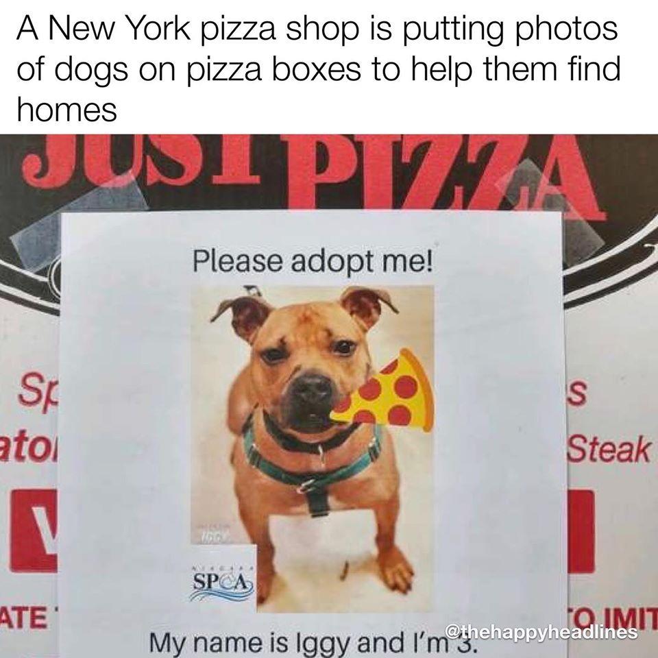 adoptable dog flyer on pizza box