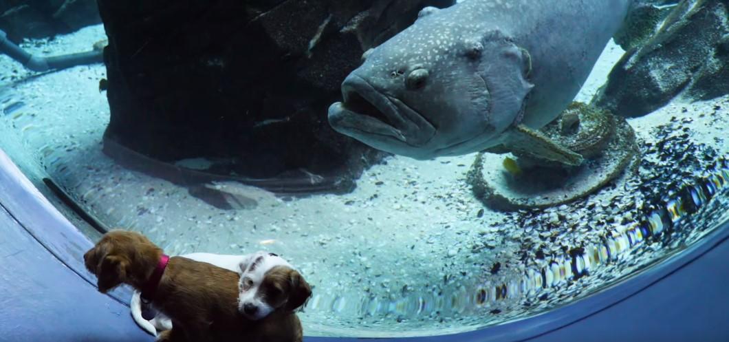 puppies looking at fish in the aquarium